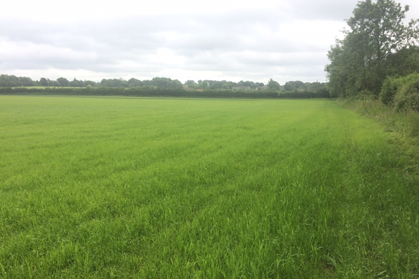 Approx 14.25 ac nr. Bishop's Waltham